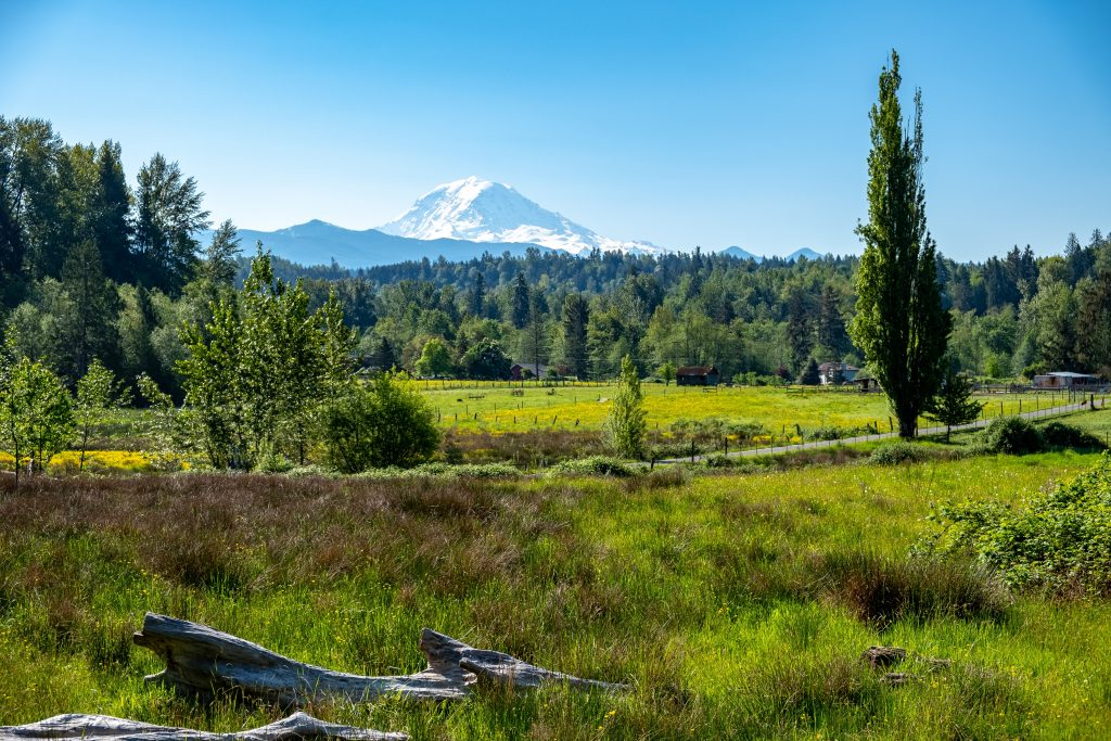 Mount Rainier from afar